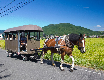 Sightseeing Horse-drawn Carriage